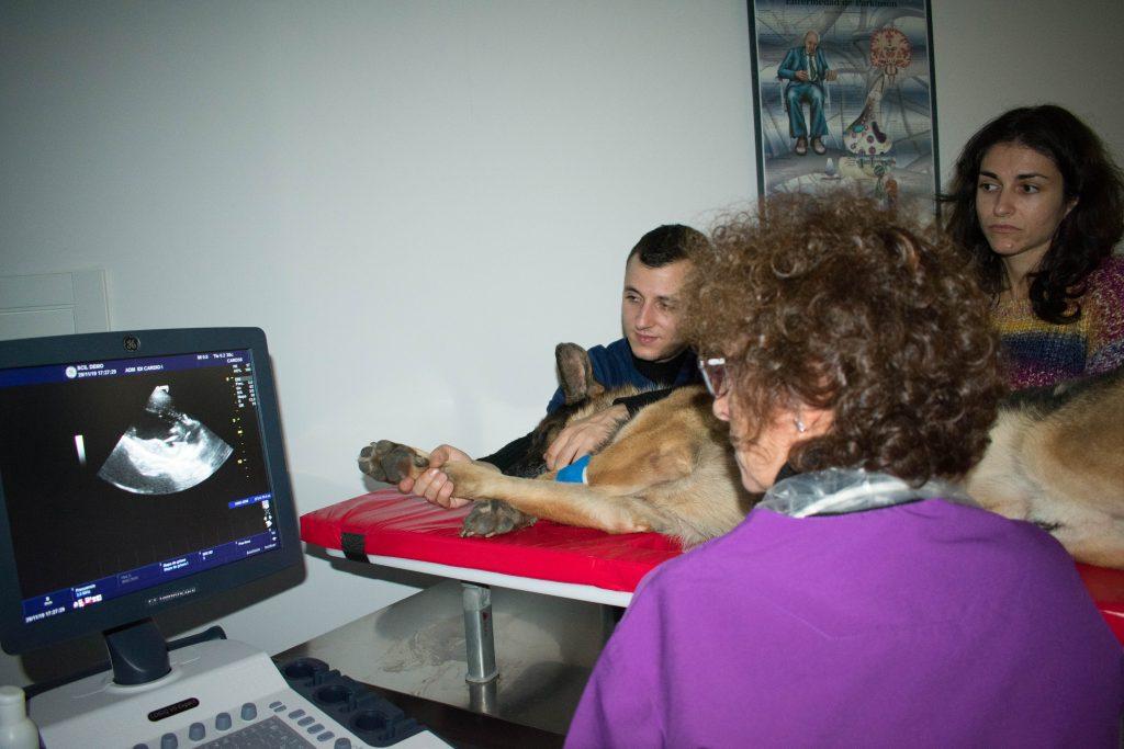 Imagen para el Diagnóstico en el sector veterinario